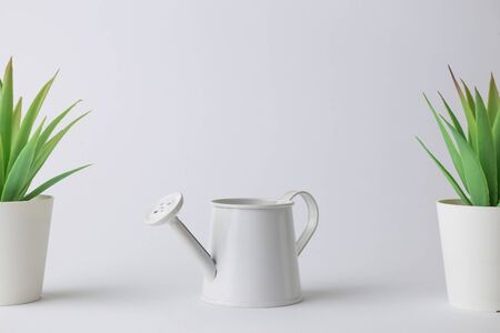 House potted plants and watering can against white background minimal creative concept. Space for copy.