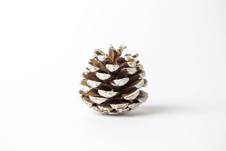 Close up of pine cone on white background minimal winter creative concept.