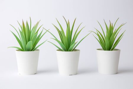 House potted plants against white background minimal creative concept. Space for copy. Banco de Imagens