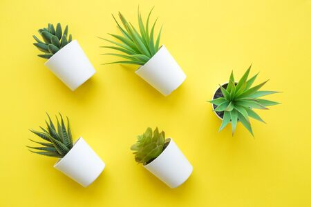 Flat lay of various house potted plants on yellow background minimal creative home decor concept.