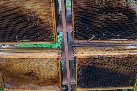 Used honeycombs, wax frames after pumping honey from them