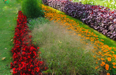 Beautiful landscape of the Summer Garden. Decorative composition of colorful flowers in Riga. Latvia. Imagens