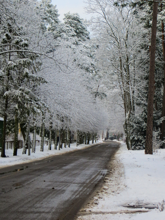 trees in the winter forest with road. Banque d'images