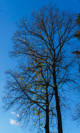 The last leaves on the branches of trees. Autumn landscape 版權商用圖片