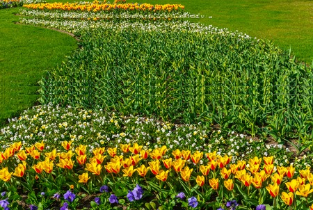Beautiful spring , multi-colored tulips planted in the city park Banco de Imagens