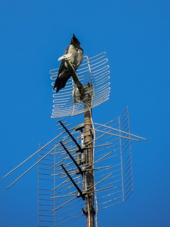 The black crow is high on the TV antenna 写真素材 - 120610434