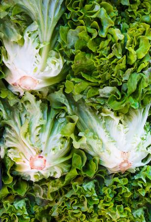 Fresh, organic bunches of lettuce grown on the farm