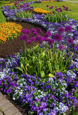 Multicolored flower beds of pansies and other flowers in the city park