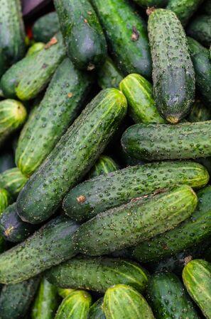 Verse, groene komkommers in een houten kist in de winkel.
