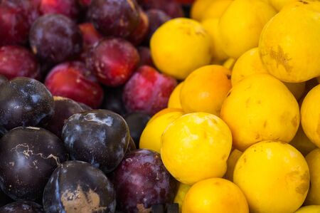 Ripe yellow, red and burgundy plums on a dish. Summer fruits