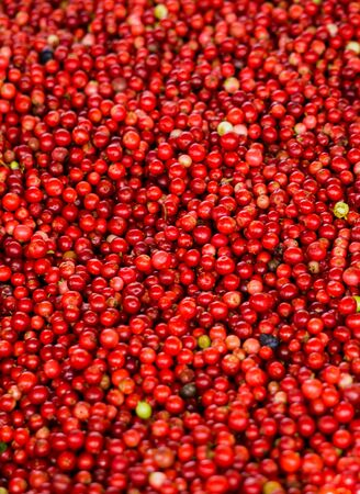 A lot of red lingonberry berries poured into a crate
