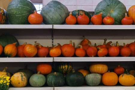 Group of beautiful multi-colored pumpkins close-up on a shelf in the market