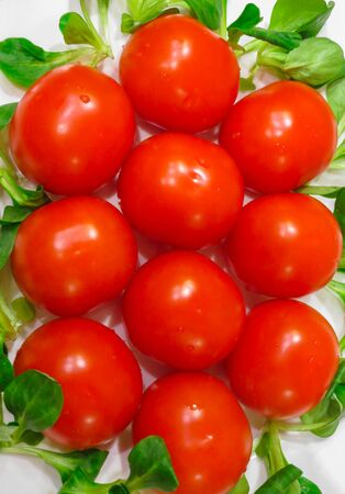 Lovely fresh small red tomatoes on a branch in the green
