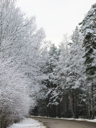 trees in the winter forest with road. Zdjęcie Seryjne