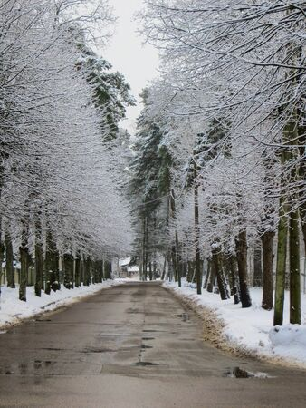 The road in the middle of snowy trees. The first snow, winter landscape Zdjęcie Seryjne