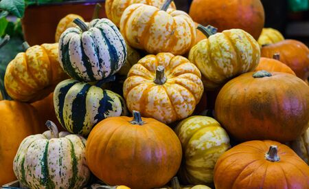 Different varieties of pumpkins at the farmers market. Harvest festival, autumn halloween. Green, orange, yellow and striped ripe pumpkins Zdjęcie Seryjne