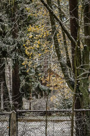 The first snow in the forest in late autumn in the forest