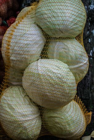 Transparent bag with white cabbage. Autumn harvest Stock Photo