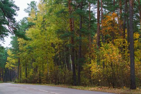 Road in the forest, surrounded by colorful trees. Autumn landscape