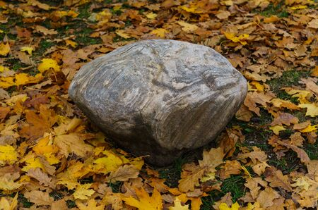 A stone boulder in the midst of fallen yellow leaves Zdjęcie Seryjne