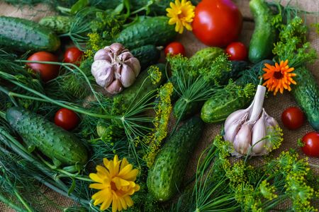 organic vegetables.a set of beet cucumbers, dill, garlic and tomato