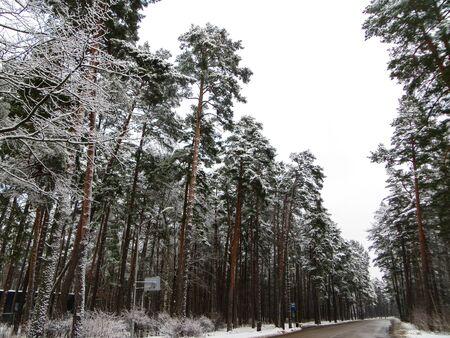 La strada in mezzo agli alberi innevati. La prima neve, paesaggio invernale