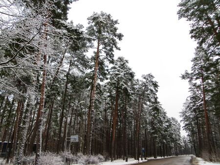 The road in the middle of snowy trees. The first snow, winter landscape