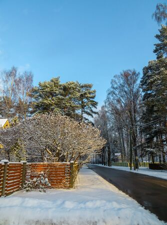 First snow. Trees brought by snow in Jurmala, Latvia 2018
