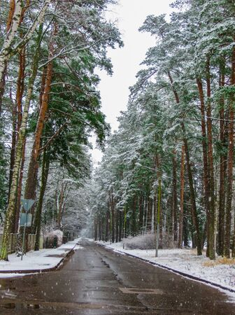 winter road and snow with landscape of trees with frost Stock Photo
