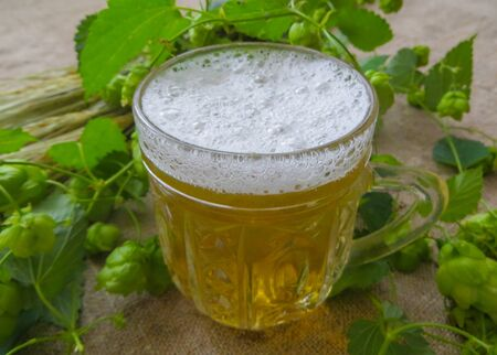 A glass of light beer, along with ears of barley and hops