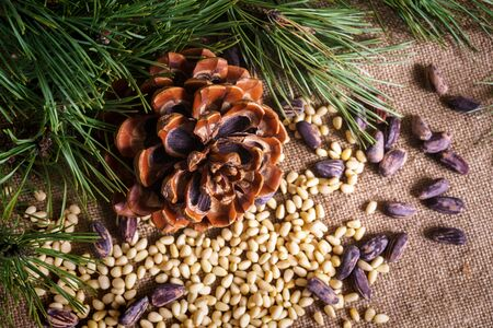 Cedar cone with peeled nuts on the table Stock Photo