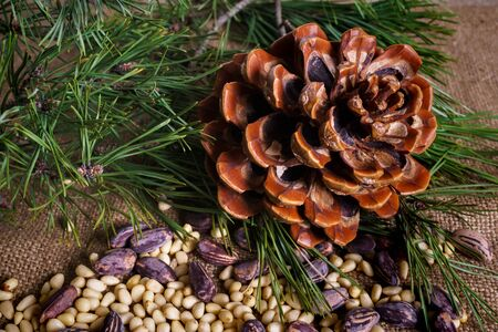 Cedar cones with nuts on the table Stock Photo