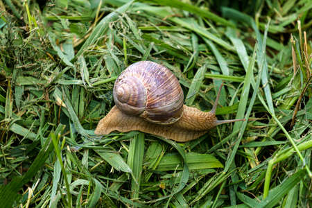 A series of photographs One day at a grape snail farm