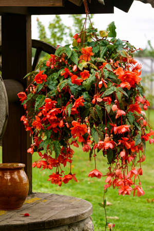 Renovated old classic water well. The well, which is decorated with flower pots with red begonia Zdjęcie Seryjne