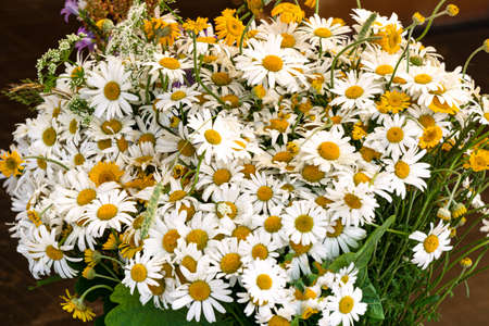 A large bouquet of field white chamomile in a vase Reklamní fotografie