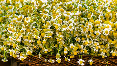 A bouquet of white chamomile in a wicker basket