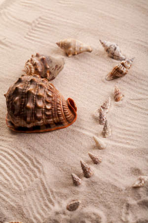 Various seashells lying on the sand arranged in a composition.