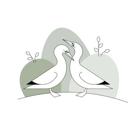 A vector illustration of two sea birds gannets made in modern abstract style 向量圖像