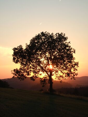 Sunset beyond the tree Stock Photo
