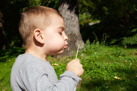 blowing dandelion: Nice little boy blowing dandelion
