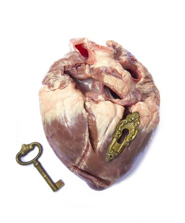 ventricle: close heart muscle body organ