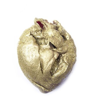 ventricle: gold heart muscle pride body organ