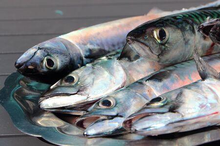 silvery: Mackerel was pewter dish