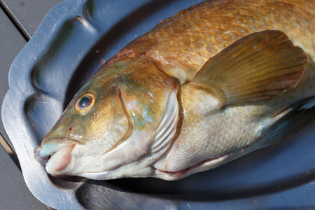 Beige and brown allan wrasse on a pewter dish after fishing in Brittany