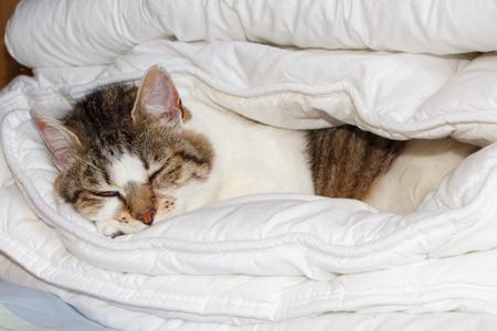 Tabby cat sleeping in a folded duvet on a bed