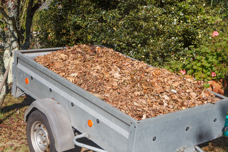 Trailer full of dead leaves after collection in a garden during autumn Reklamní fotografie
