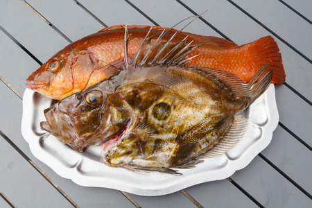 Orange ballan wrasse and brown St Pierre on a pewter dish after fishing in Brittany Stock Photo