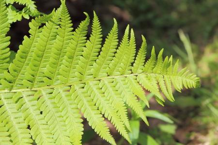 Leaf of a fern in a field