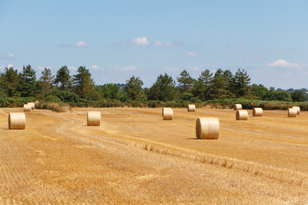 Straw bales in a field after harvest in Brittany