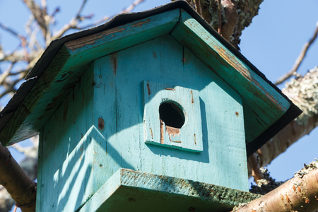 Green birdhouse in a japanese cherry tree